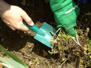 trädgård-arbete